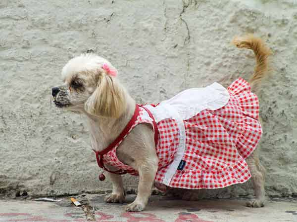 Big Dog Clothing Store Locator | Dog Clothing